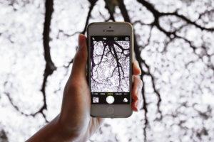Фото веток дерева на телефон