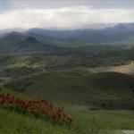 Горные пионы в Коктебеле в Крыму