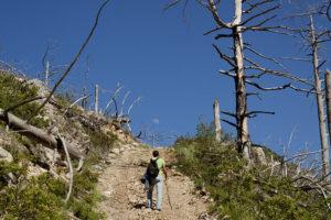 Дорога на гору Шаан-Кая в Крыму