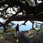 Девушка у дерева на горе Ай-Петри в Крыму