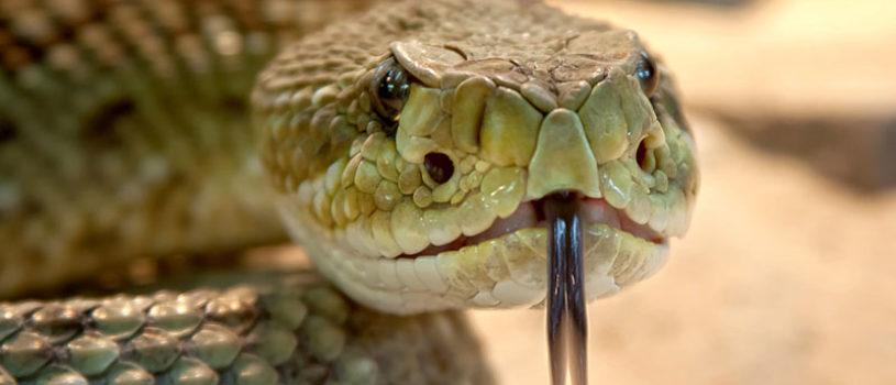 Змеи, клещи, сколопендры и другие опасности Крыма