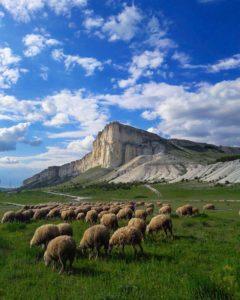 Белая скала со стадом баранов в Крыму