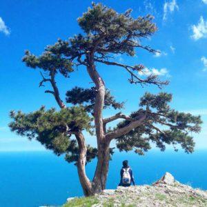 Девушка и дерево на горе в Крыму