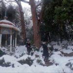 """Никитский ботанический сад в снегу из фильма """"Асса"""""""