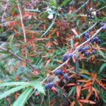 Парк Монтедор Никитского ботанического сада в Ялте