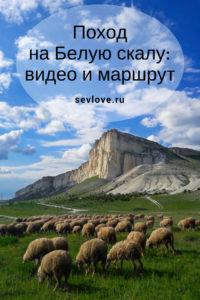 Стадо баранов у Белой скалы в Крыму