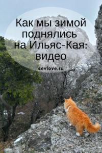Рыжий кот на Ильяс-Кая в Крыму