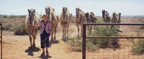 """Кадр из фильма """"Тропы"""" девушка с верблюдами"""