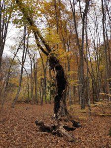 Дерево в Большом каньоне