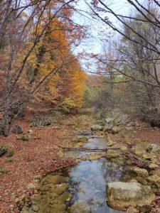Осень в Большом каньоне