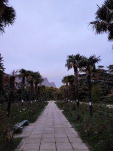 Пальмовая аллея в Форосском парке