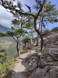 Тропа на скалу Ставри-Кая на Боткинской тропе
